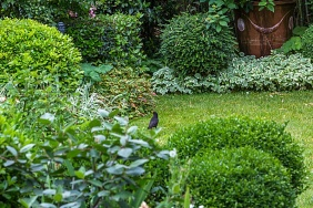 Bios_2027075 Philippe Giraud Titre - Merle dans un jardin urbain.jpg