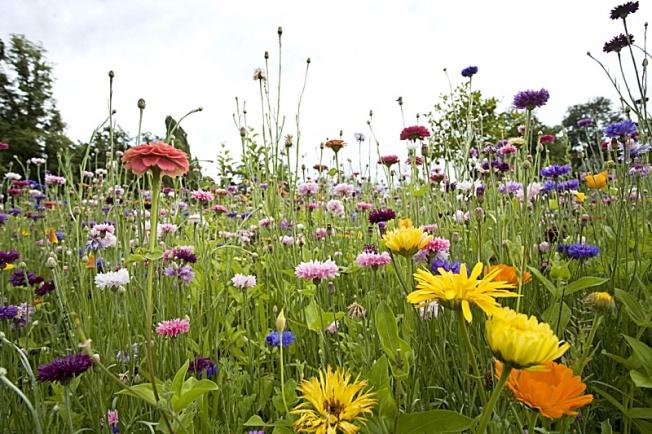 Pq prairie fleurie
