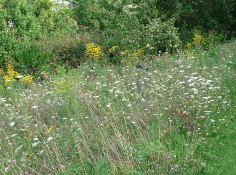 Accueil eden lacustre les jardins de no les jardins for Jardin eden prairie