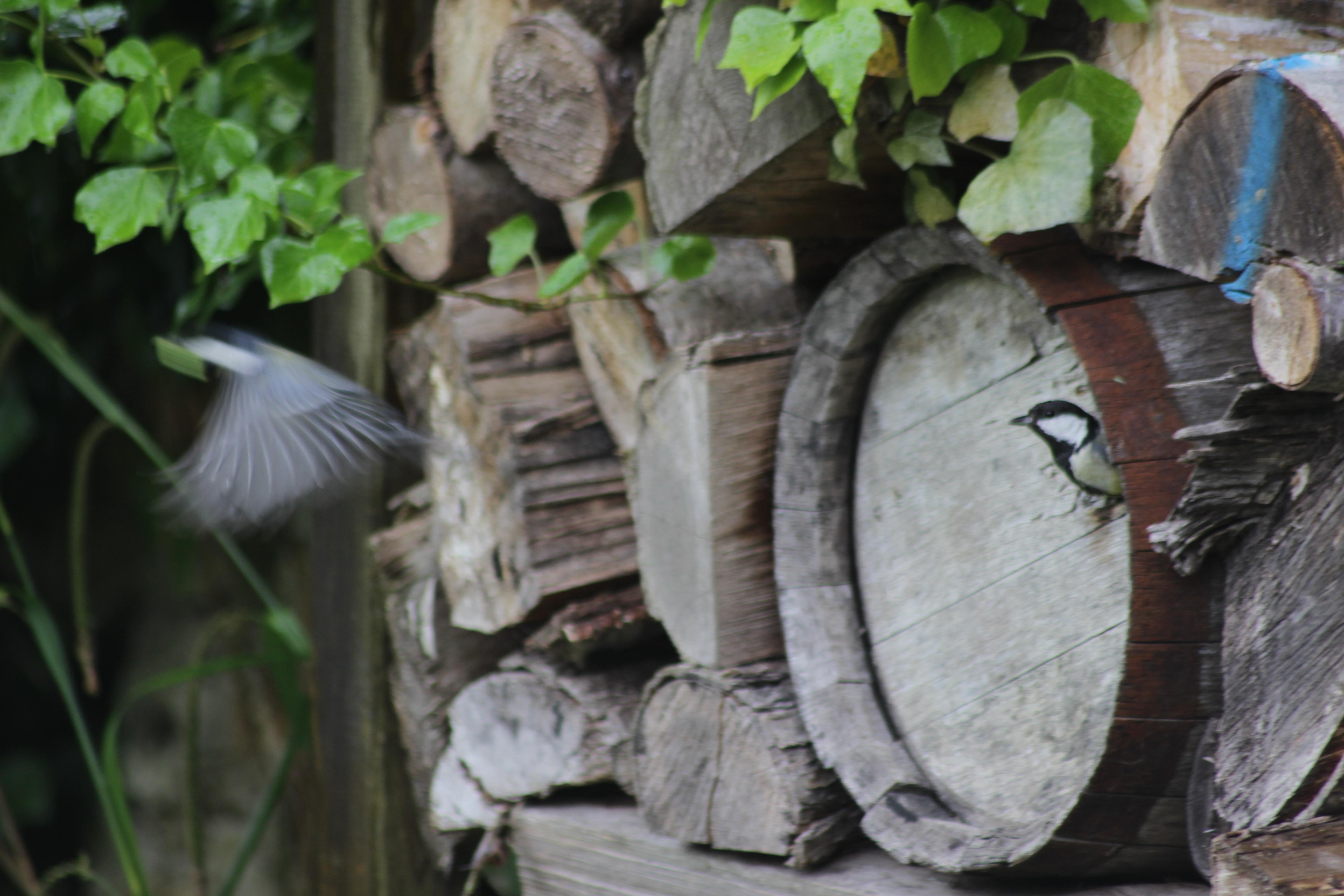 Jean paul les jardins de no les jardins de no for Jardin entretien jean paul traineau
