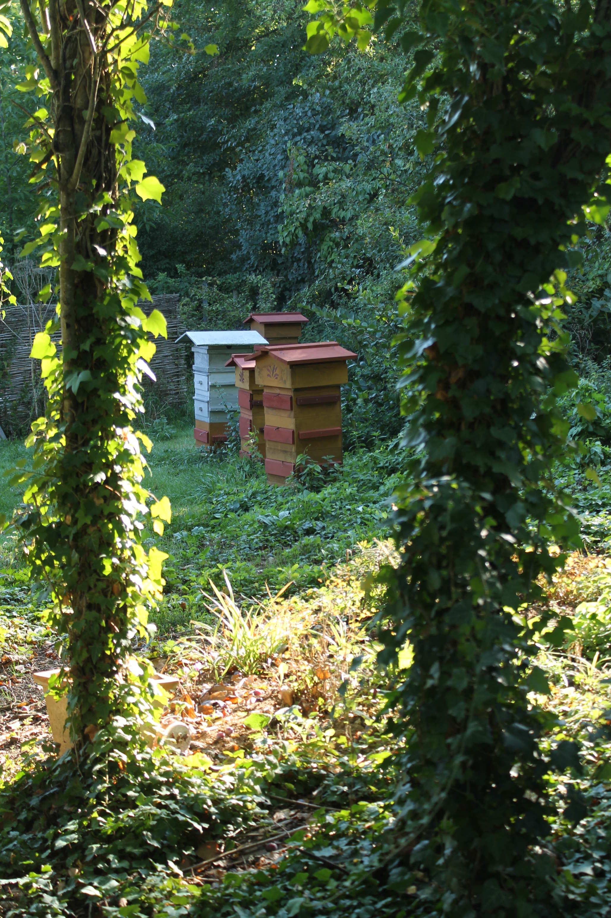 Accueil jardins amis des abeilles les jardins de no for Au jardin des amis