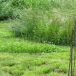 Logo du groupe Mal rasés… jardins aux herbes folles!