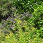 Logo du groupe Le jardin de Mousterlin
