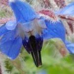 Logo du groupe Les volets bleus